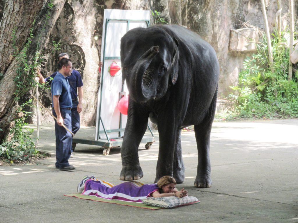 Российским туристам не страшны даже слоны.
