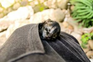 Котёнок умер - грустная история о кошечке, которую не удалось спасти